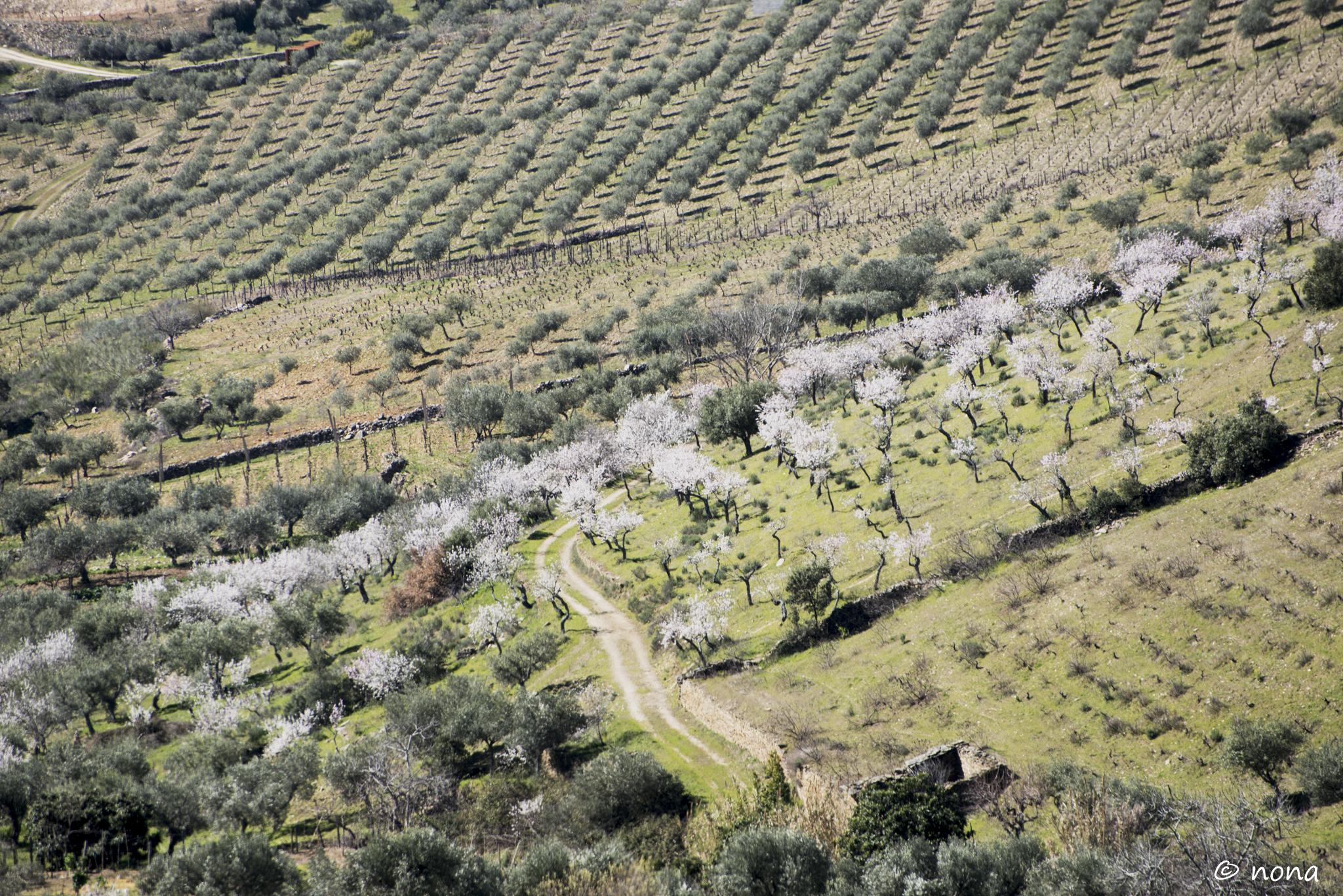 2015 - Rota das Amendoeiras (188).jpg