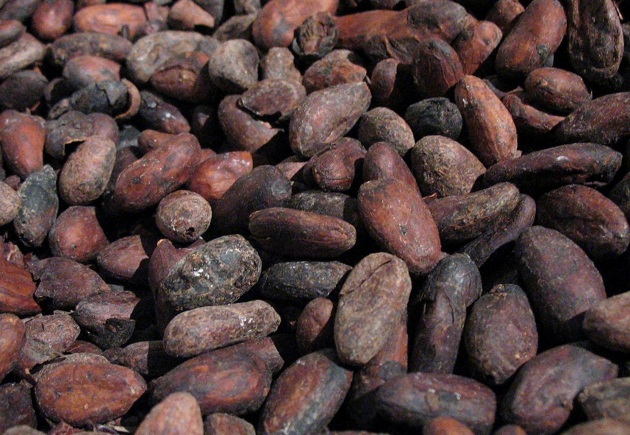 1280px-Cacao-roasted.jpg