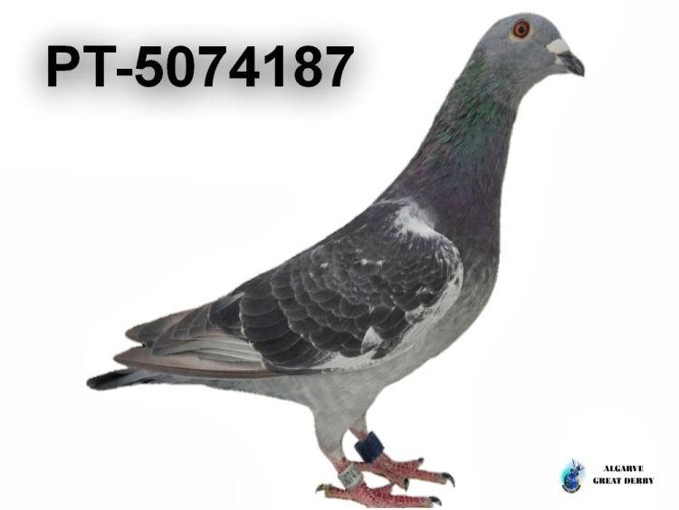 PT-5074187.jpg